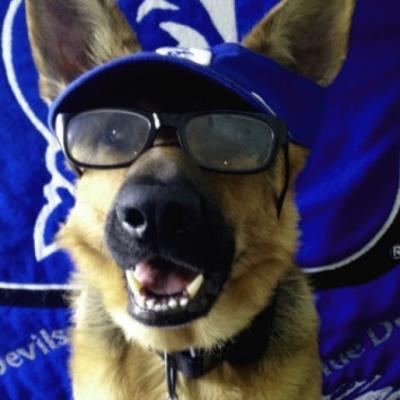 bluesdog
