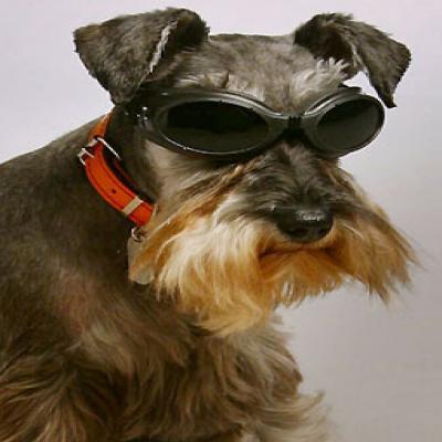 Blind-Dog