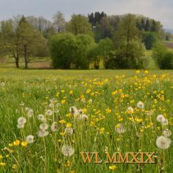 WL MMXIX